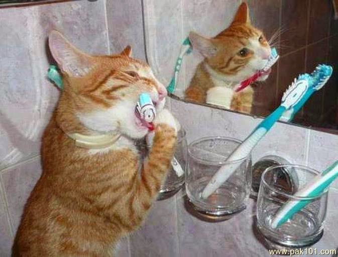 cat_toothbrush_gwmpw_Pak101(dot)com