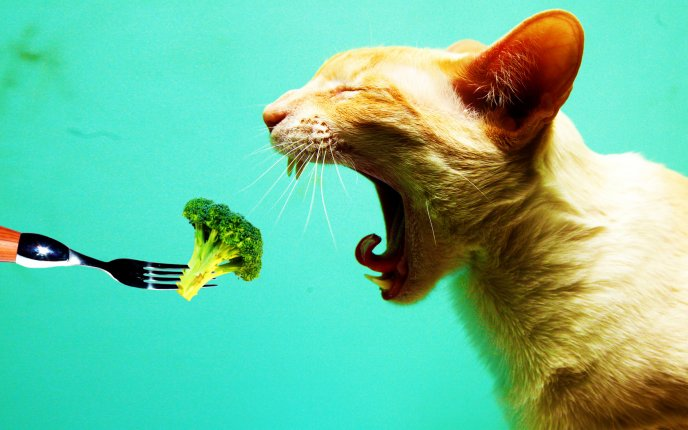6053_Eat-the-cat-with-vegetables-funny-HD-wallpaper